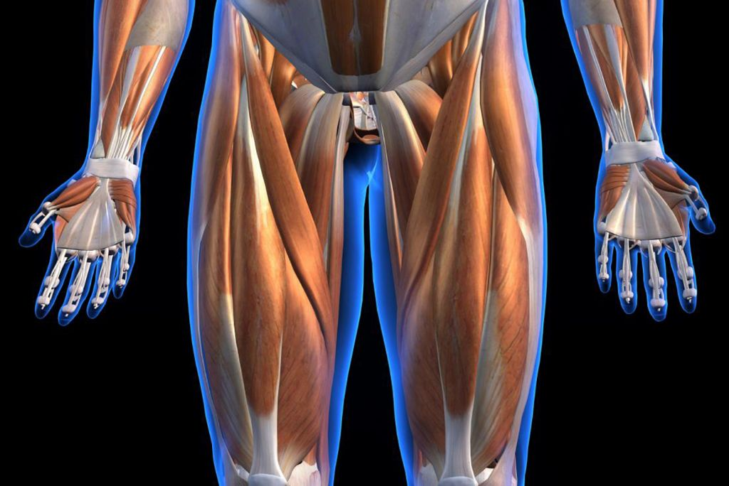 Muscle and Ligament Strains